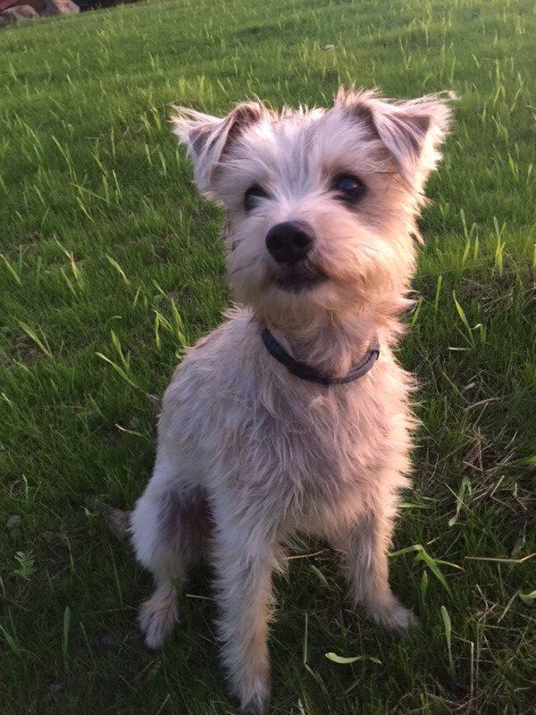 Photo of Dog Ellie